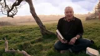 Martin Taylor - An Artist At One With Nature