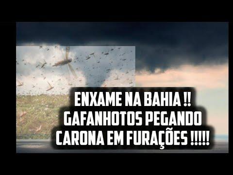 Gafanhotos pegando carona em Ventos: Ninguém esta notando o que isso pode causar no Mundo