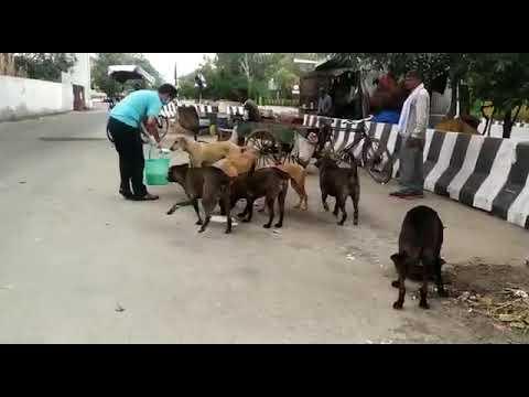 feeding in another spot delhi