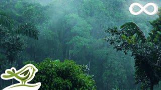 Relaxing Music & Soft Rain: Sleep Music, Calm Piano Music, Healing Music, Peaceful Music ★149