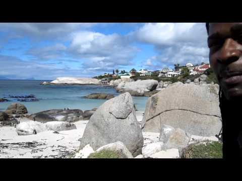 Hout Bay in Cape Town, South Africa  – Penguins