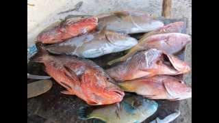 Baja Spearfishing: Road Trip, Part III