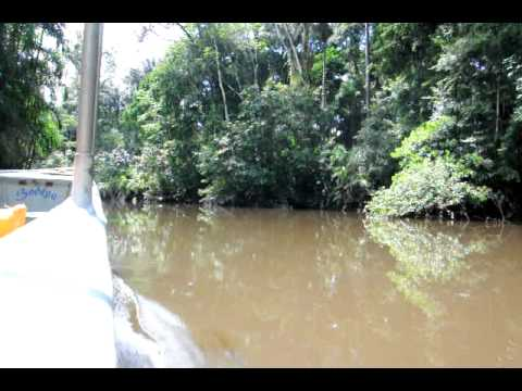 Black water canoe ride in Yasuni