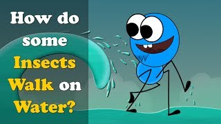 How do some Insects Walk on Water? | #aumsum