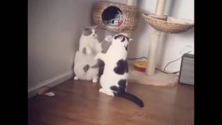 Most brutal cat fight ever