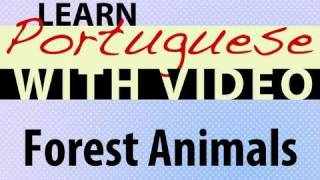 Learn Brazilian Portuguese with Video - Forest Animals