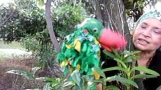 Papagaio Louro.