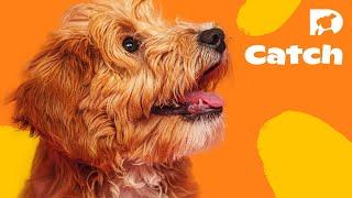 DOGTV Stimulation: Parklife (Sample) Visit DOGTV.com for a risk-free trial
