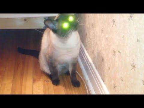 """عيون القط """"باكو"""" المضاءه"""