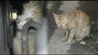 幼貓藏引擎 母貓狂追5公里救子