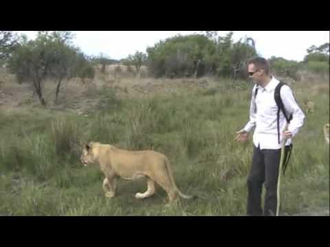 Lion Walk.m4v