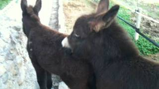 Morris and Aitana: foals at play