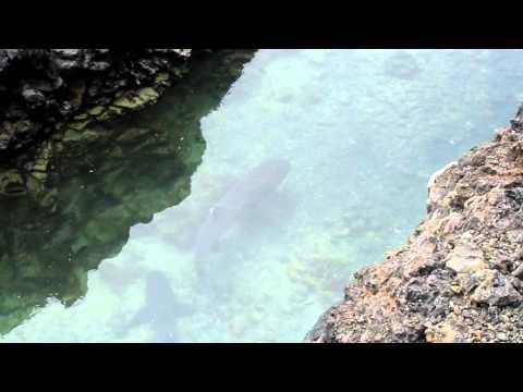 Ecuador, Galapagos, Dozens of whitetip reef sharks and a sea lion