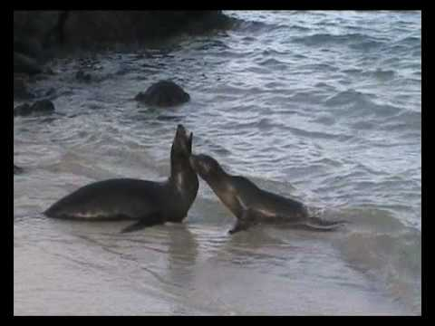 The Playful life of Sea Lions in the Galapagos Islands