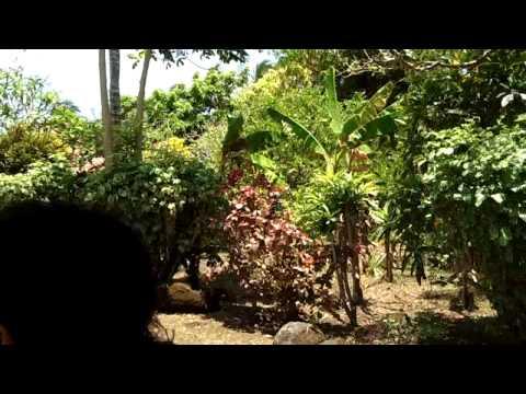 Nicaragua via Golf Cart #2