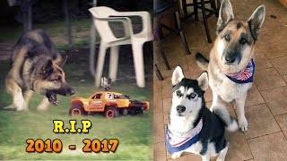 Tribute to Zeus Atwood - Roman Atwood Dog - RIP 2010 - 2017