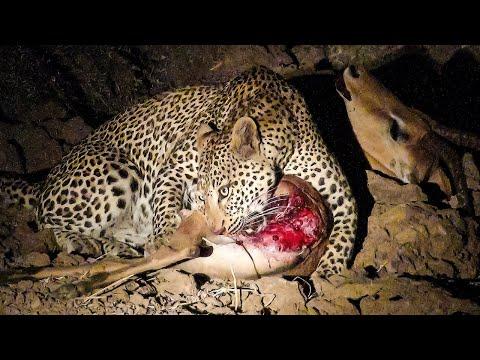 Mama Tembo Tours Night Safari Luangwa NP Zambia