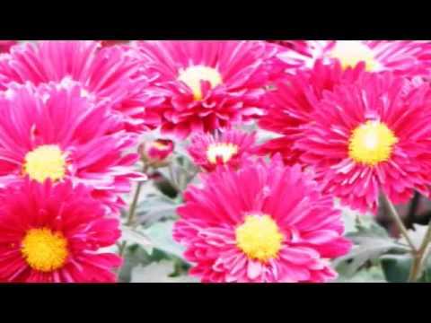 FLOWER . flv