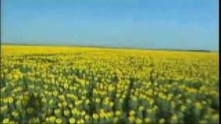 La gusana ciega - Tornasol ( Vueves a ser)