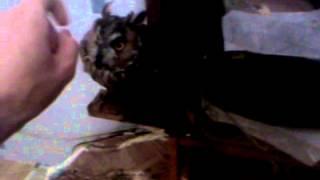 Owl - Hoot sound training