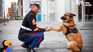 Soldiers Come Home To Dogs Compilation & More | The Dodo Best Of width=