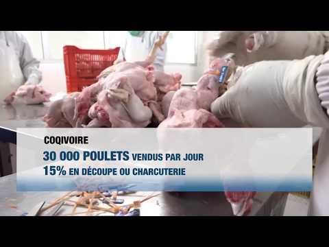 Aviculture : Sipra, quand le savoir-faire ivoirien s'exporte (Dossier)
