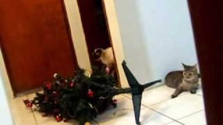 Panda e Sushi no Natal