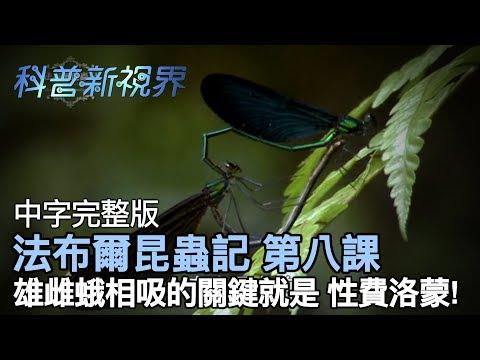 激昂的生命   昆蟲之間 有真愛嗎!!?? 你知道螳螂在交配後,女生會一口把男生吃掉!! 【法布爾昆蟲記 第八課】全片線上看 - YouTube