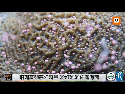 0505墾丁珊瑚產卵 海底奇觀線上直播 - YouTube