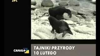 Łapu Capu - Rok 2006 - Konkurs Złote Jajo - Zwierze MIESIĄCA