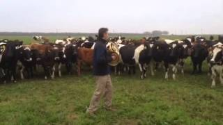 Andrew McAfee on horn with singing cow