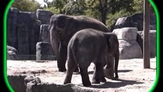 Un éléphant sur mon balcon - Roger Whittaker
