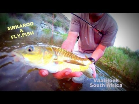 Fly Fishing for Smallmouth Yellowfish and Smallmouth bass in the Little Karoo, South Africa