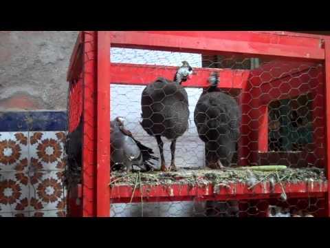 MOROCCO: Marrakech Indoor Food Market
