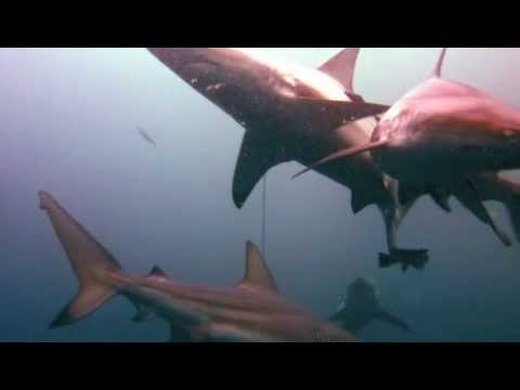 South Africa Diving