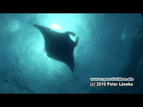 Galapagos Reisebericht – Tauchabenteuer Wolf & Darwin  – Diving adventure Galapagos Peter Löseke HD