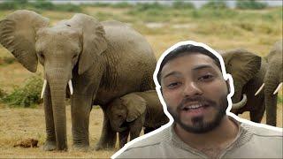 لية الفيلة جلدهم ملئ بالتجاعيد؟ و معلومات أخرى عن الفيلة | Top facts about elephants