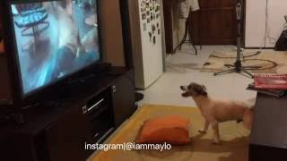 iammaylo | maylo the dog WATCHING HORROR MOVIE 2  The Ring