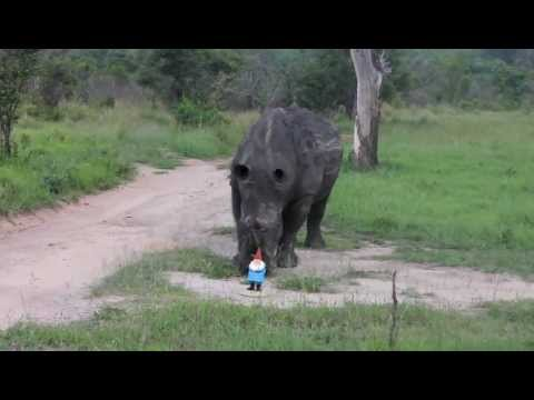 The Roaming Gnome goes on a South African safari