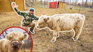 I Bought a RARE MINI COW for My BACKYARD FARM!!! (Expensive)