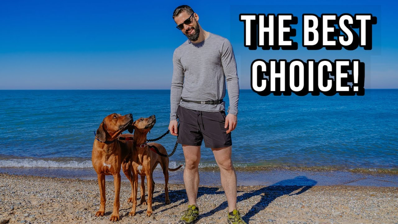 The Best Training Technique for Rhodesian Ridgebacks Video Thumbnail