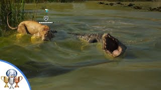 Assassin's Creed Origins - Set Up Date Trophy - Taming a Lion and Bringing it to a Crocodile