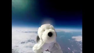 Sam the Dog gets sent into Space (with Interstellar soundtrack)