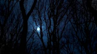 The Dark Forest At Night   Free Stock Video   OrangeHD com