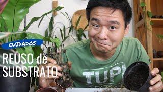 Reutilizar o substrato do vaso? Boa ideia?