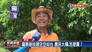 乾旱+樁象+颱風 內門龍眼產量不到1%-民視新聞