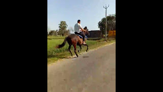 Horse running on road || cantre