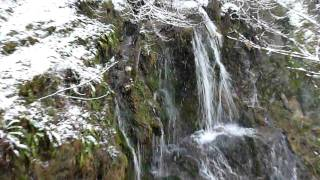 Бари в Странджа планина