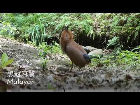 龍崎牛埔自然生態之美 3-1 很多種鳥