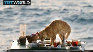 Egypt Tax Hike: Pet food price rises 40 percent due to new tax